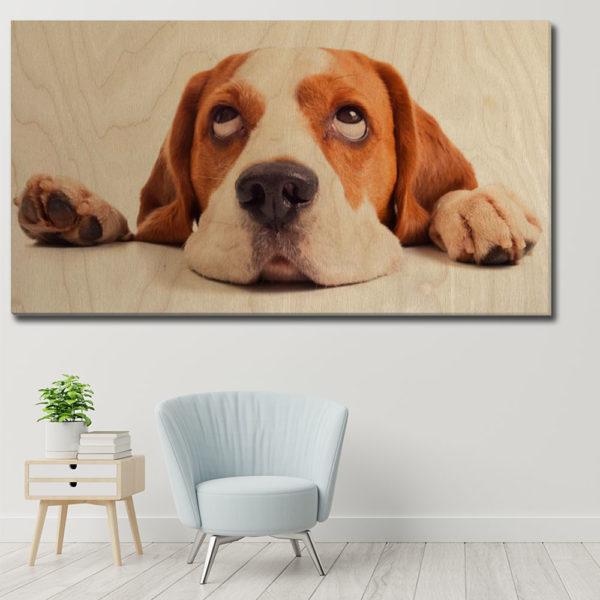 Πίνακες σε Kόντρα Πλακέ Θαλάσσης - Ζώα